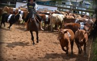 EXPOINTER 2015 - CAMPEREADA/TEAM PENNING